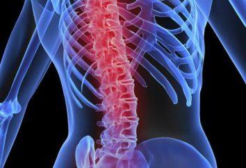 Rdzeń kręgowy: cechy strukturalne, typy i funkcje