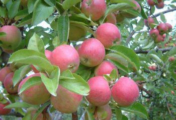 Idared – una sorta di mele, che vale la pena provare