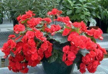 Kwiat z czerwonym kwiatem – symbol witalności