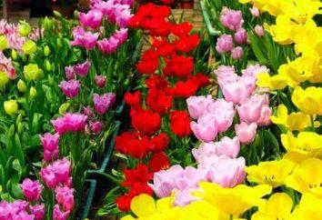 Quiero saber por qué las flores de diferentes colores?