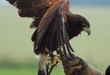 Lista ptaków drapieżnych. Opis i cechy życia
