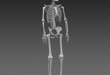 Classificação de ossos humanos e articulações
