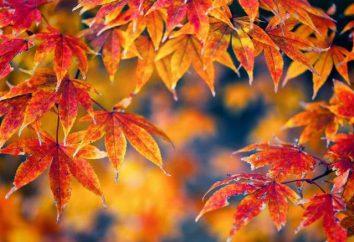 Los colores dorados del otoño. colores múltiples colores brillantes de otoño. composición