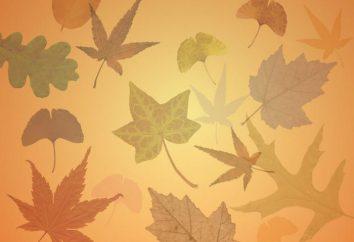 Come raccogliere, conservare e decorare gli erbari dalle foglie?