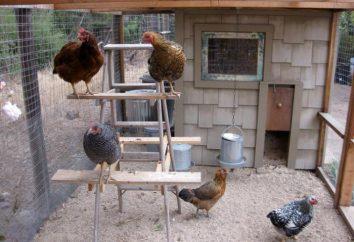 Desinfektion der Drogen :, Hühnerstall. Wie der Hühnerstall zu desinfizieren?