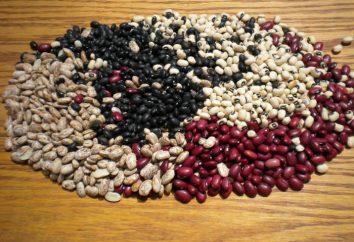 Les haricots: avantages et inconvénients. haricots verts