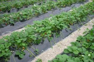 Difficile si condivide residente estate, o come trattare con le erbacce in giardino