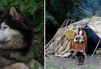 """""""Husky Eco Park"""" (Moskau): Wie man dorthin? Bewertungen und Fotos der Besucher"""