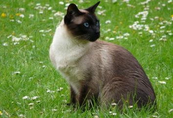 Feline pseudonim danej rasy