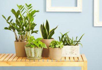 Des soins appropriés à la maison pour les plantes d'intérieur