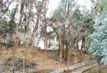 """Eucalyptus Grove"" (casa de huéspedes), Abjasia: opiniones"