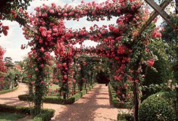 fiori ricci per il giardino – parte integrante della decorazione