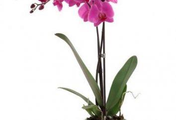 Qui a peur de l'orchidée? organismes nuisibles aux végétaux