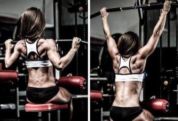 Formation sur le dos de poids: exercices de base, et examen exhaustif des programmes