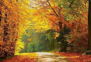 Piękne frazesy o jesieni. Wiersze i przysłowia