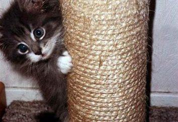 Quelques mots sur la façon d'enseigner un chat à un griffoir