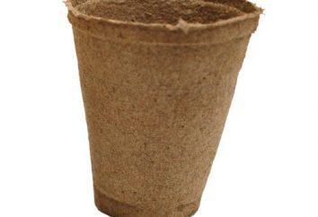 vasetti di torba: come usare? piantine in crescita in vasi di torba