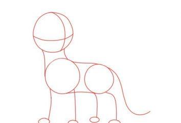 Jak narysować ołówkiem Fox w etapach na różnych poziomach przygotowania