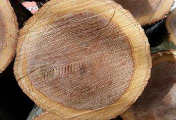 propriedades da madeira diferentes raças: madeira