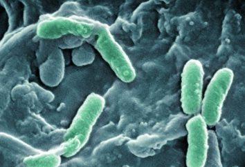 Les bactéries dans l'urine de l'enfant: les symptômes, les causes, la prévention