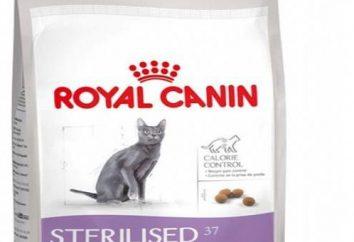 """Per i gatti sterilizzati """"Royal Canin"""": principali caratteristiche e recensioni"""