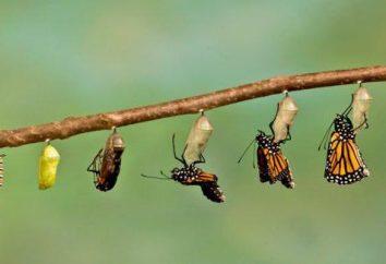 Imago – quel est-il? Adultes étape (définitive) du développement individuel des insectes et des arthropodes