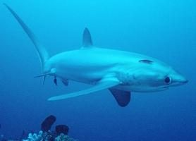 Dangerous pesci del Mar Rosso