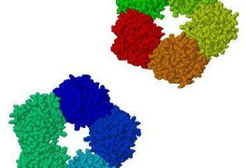 C-reaktywne białko: szybkość i wzrost krwi