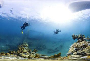 Des récifs coralliens. Grande barrière de corail. Le monde sous-marin des récifs coralliens