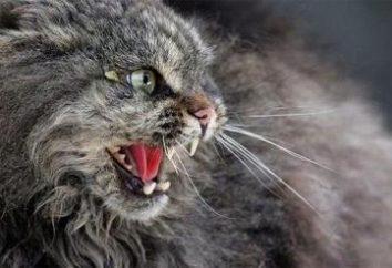 Come prevenire la rabbia in un gatto?