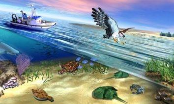 Habitat – l'area di distribuzione di un taxon (famiglia, genere, specie)