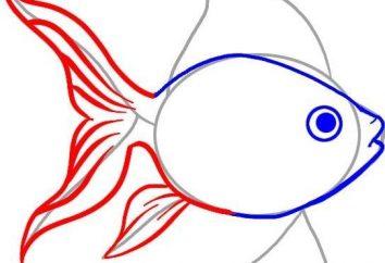 Jak narysować rybkę z ołówkiem? Instrukcje krok po kroku