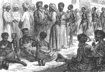 estado Slave: a educação, a forma, a estrutura