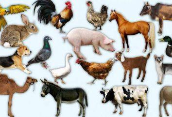 Was ist der Unterschied von den wilden Haustiere?