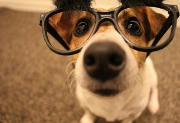 ¿El color del perro distinguir? perlas de los ojos del mundo