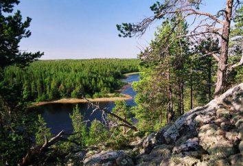 Lasy Karelii: opis, natura, drzewa i ciekawe fakty