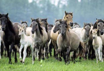 La couleur la plus commune du cheval avec des photos et des noms