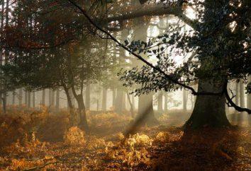 Journée des travailleurs forestiers – une merveilleuse journée de Septembre!