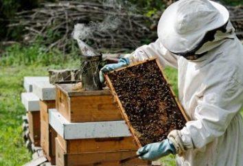 Vorbereitung auf den Winterbienen: beruhigend, trocken, warm und mit dem Gebärmutter