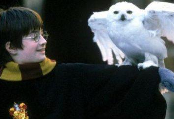 Owl Harry Potter. Quel était son nom?