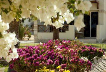 Coral Beach Hurghada Resort 4 *: caractéristiques de la plage, photos et avis de touristes