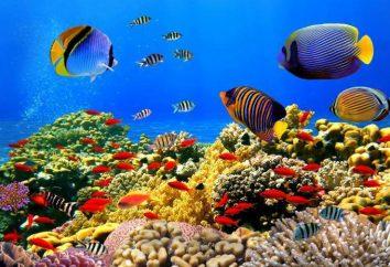 A principal característica do habitat aquático é … Propriedades habitats aquáticos