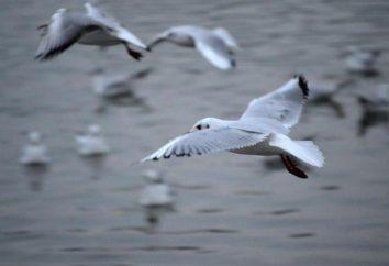 Podwójne ptaki Breath zwłaszcza wymiana gazowa