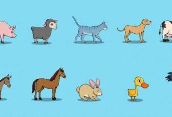 Enseñar a los niños cómo hablan los animales