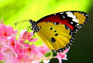 La farfalla volò in casa – buona fortuna