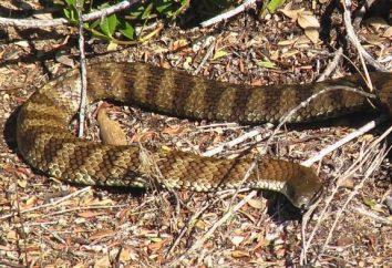 O repelente mais efetivo das cobras