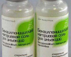 Benzylpenicillin sale di sodio: istruzioni per l'uso. regole applicative