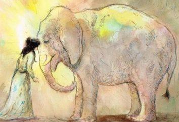 Interpretazione dei sogni: l'elefante – perché sognare?