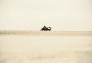 Minimalismo na fotografia: características, idéias interessantes e recomendações de profissionais
