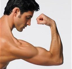 Endokrinologie: männliches Sexualhormon
